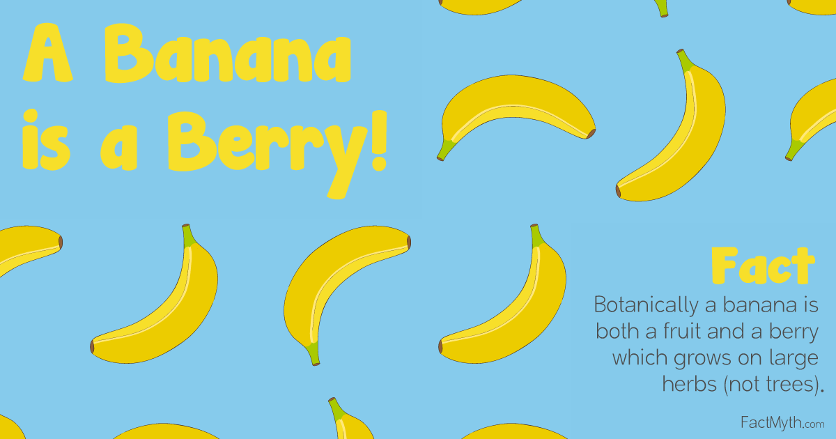 A Banana is a Berry