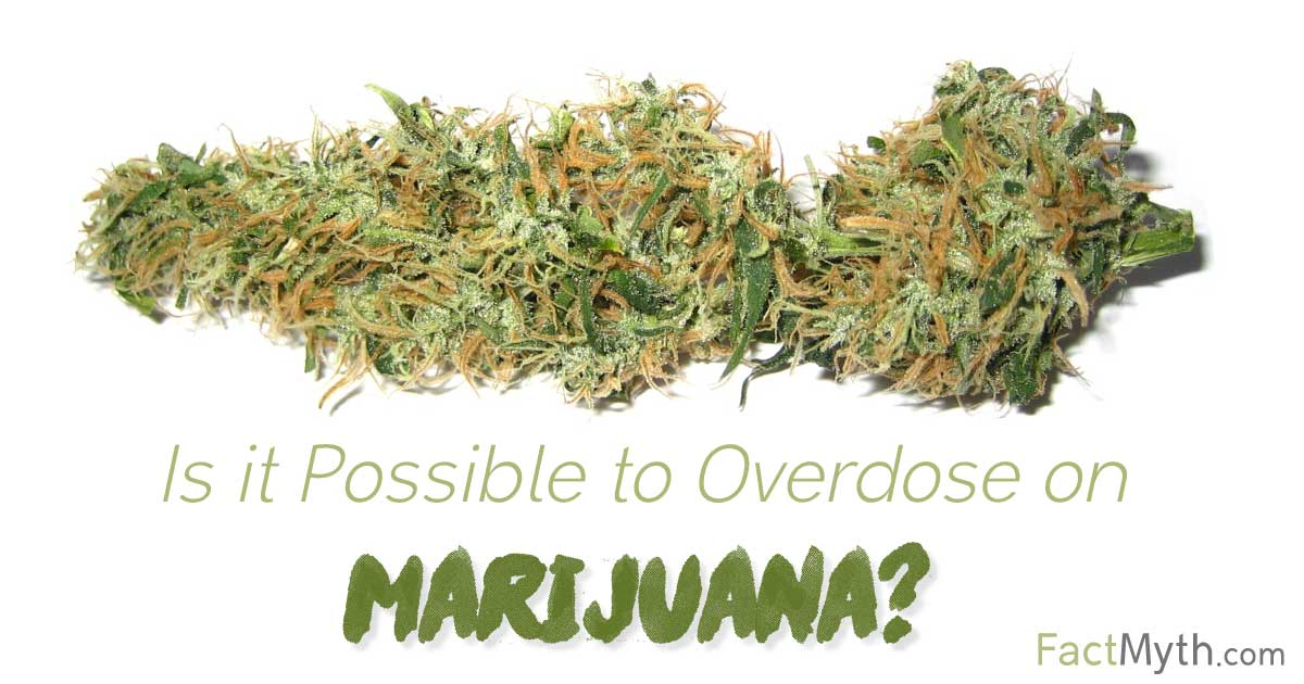 You Can't Die From a Marijuana Overdose