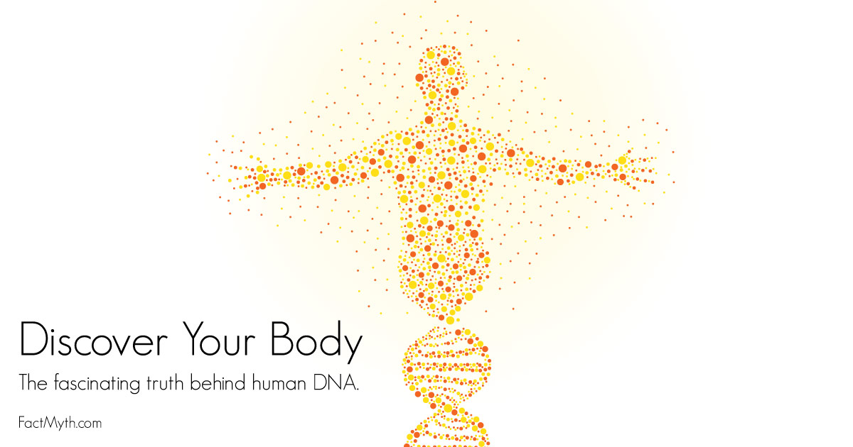 All Cells in a Human Body Have the Same DNA