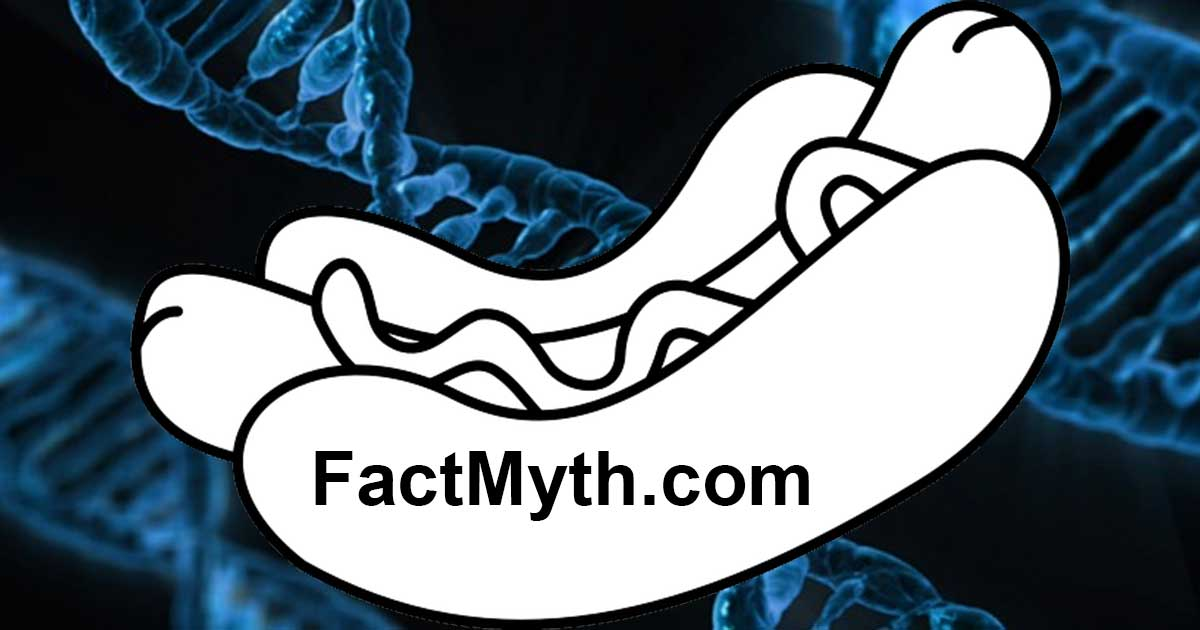 Do all hot dogs contain human DNA?