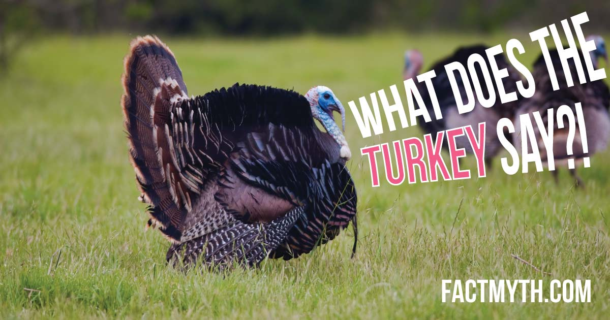Do Only Male Turkeys Gobble?