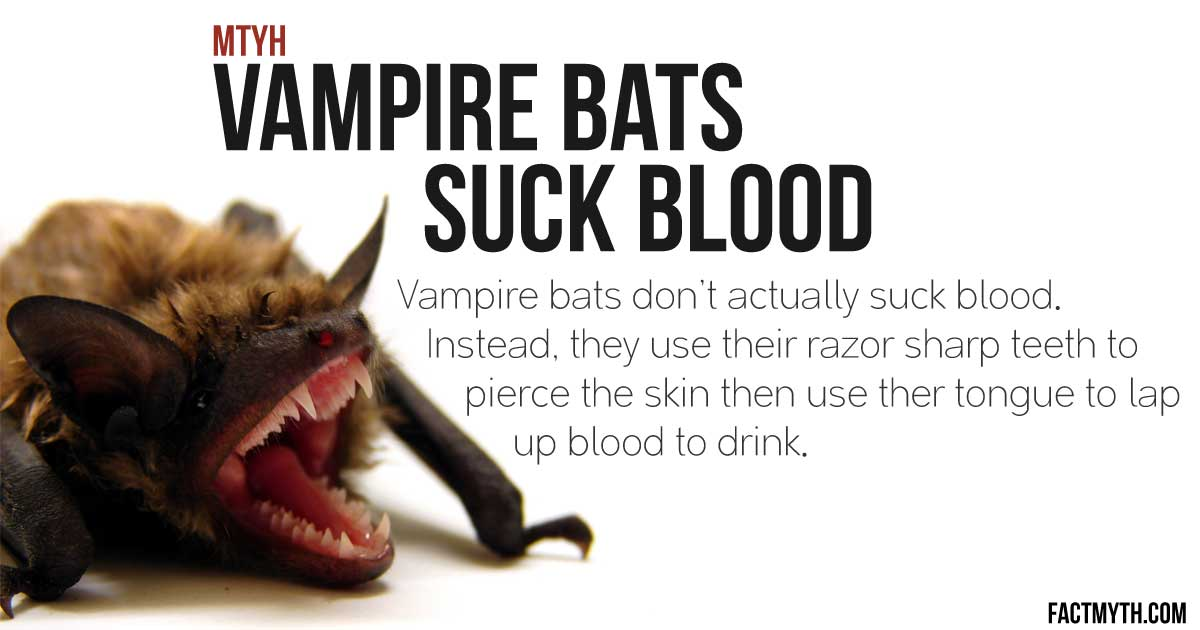Do Vampire Bats Suck Blood?