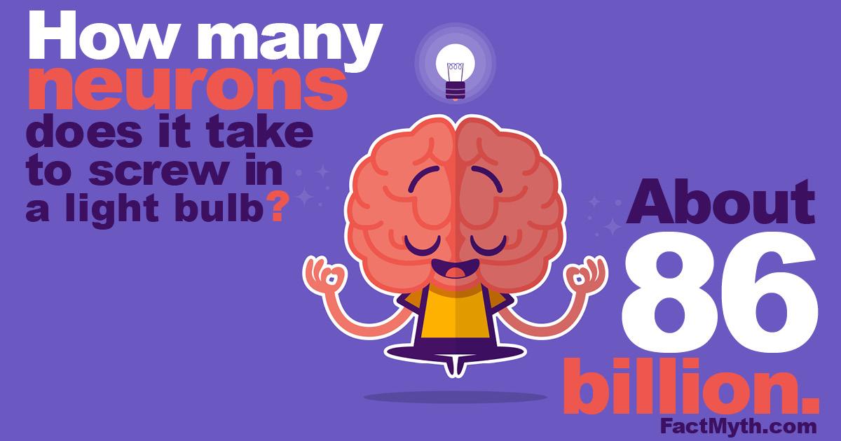 Humans have about 86 billion neurons