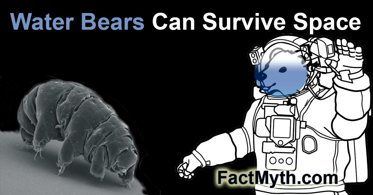 Water bears can survive space
