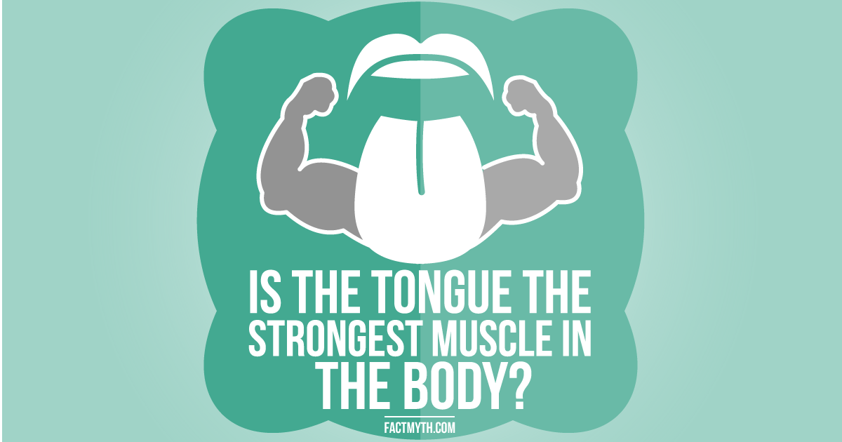 the tongue is the strongest muscle in the human body - fact or myth?, Muscles