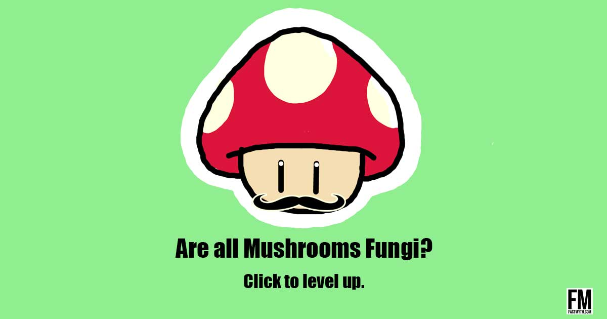Are all mushrooms fungi?