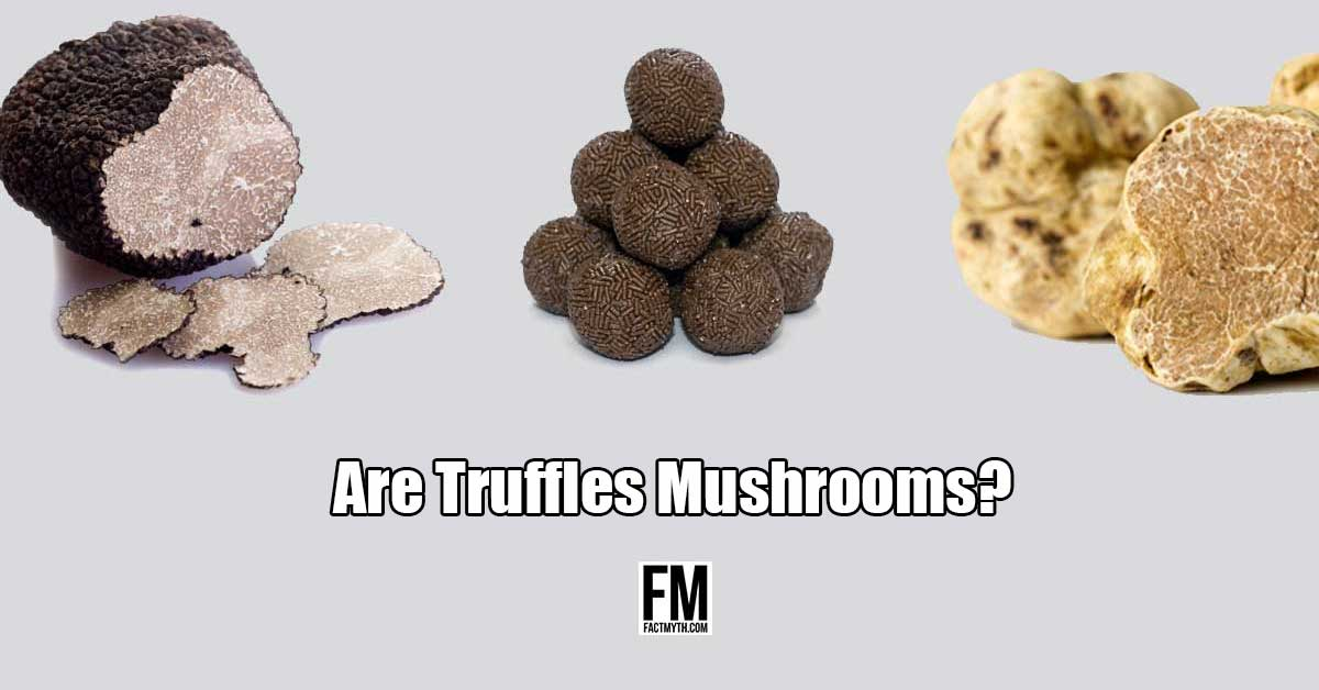 Are truffles mushrooms?