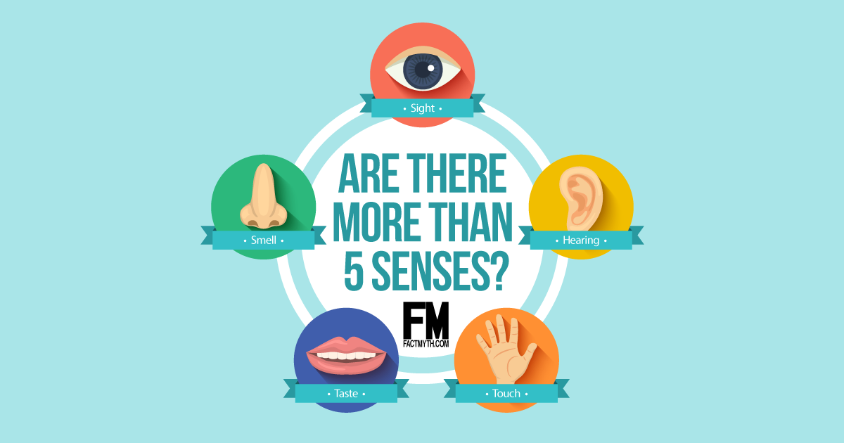 There Are Only 5 Senses Fact Or Myth