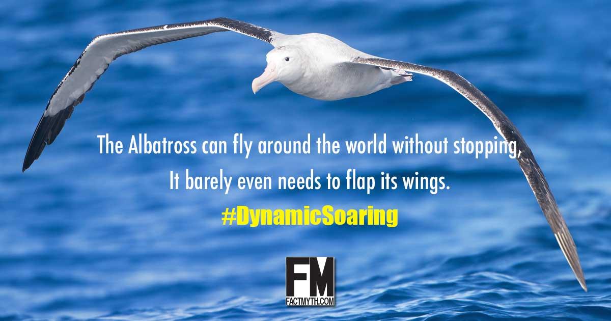 Albatross Dynamic Soaring