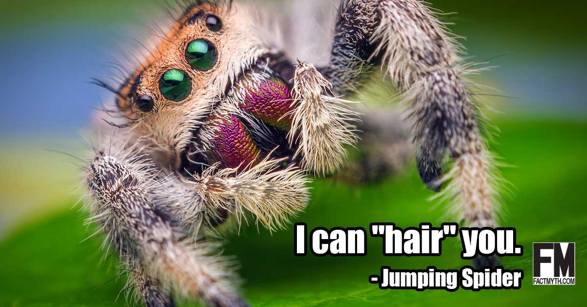 Spiders can hear
